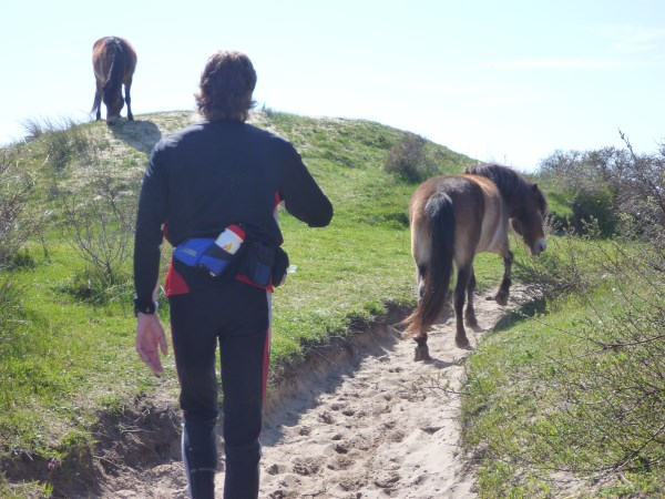 144. Francis Spoelstra tussen de wilde paarden