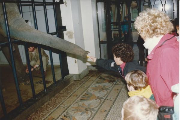 Ed Soriano voert een olifant in de dierentuin van Antwerpen