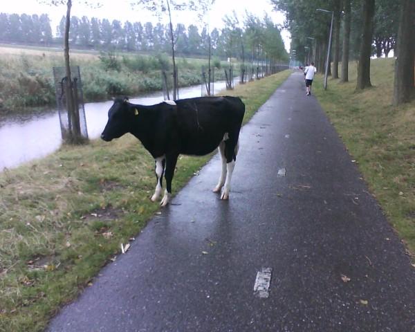 Haarlemmermeer marathon
